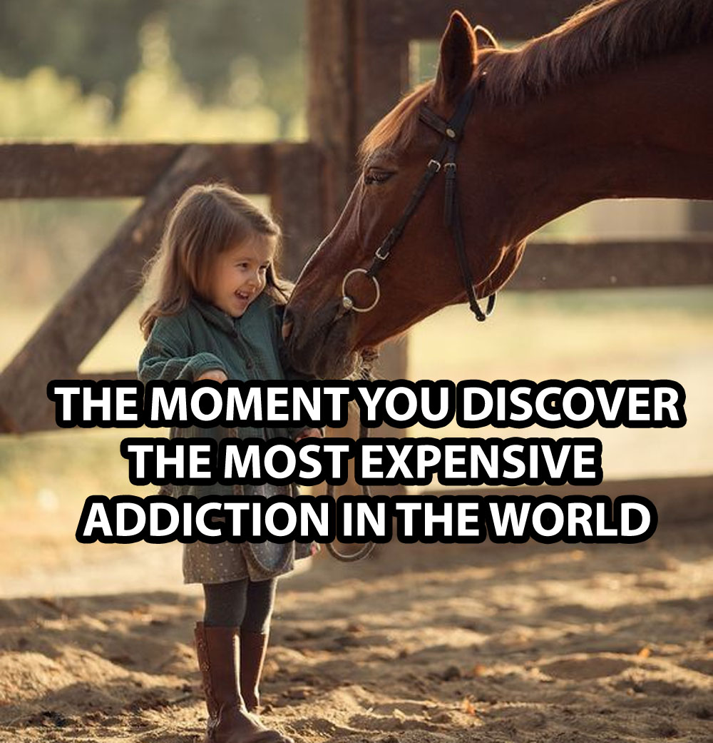 Signs You Are A Horse Addict