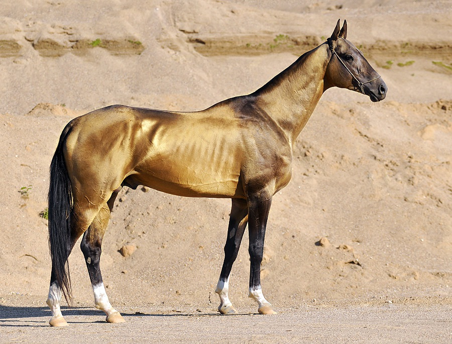 The Oldest Horse Breeds From Around The World