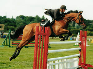 German showjumping Horses - Agretto