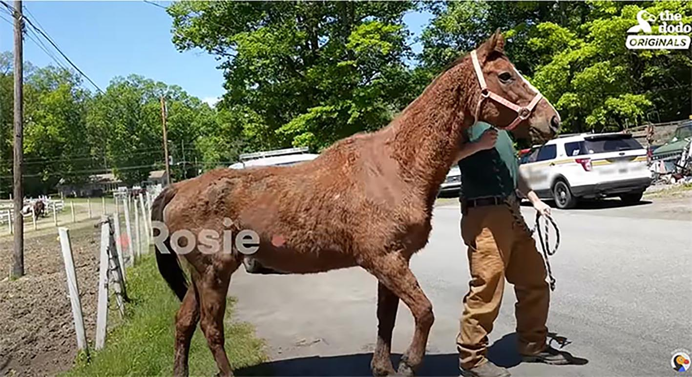 Starving Horses Rescued, Rehabilitated and Given a Beautiful New Home