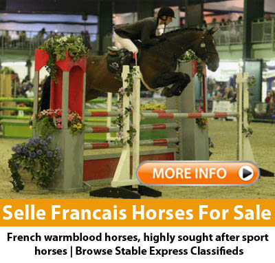 Selle Frncais Horses For Sale